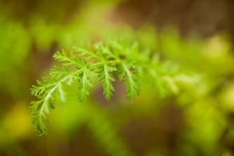Alaska species plants flowers Botanical Gardens 0067 Alaska Channel