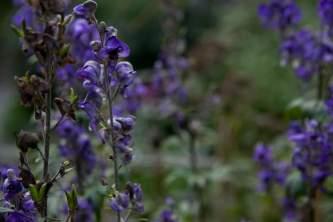 Alaska species plants flowers IMG 7503
