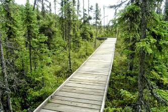 Alaska species trees R 6 2