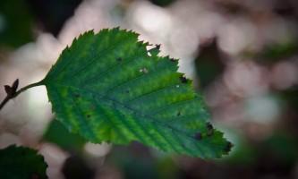 Alaska species trees IMG 7979 Copyright Alaska Channel