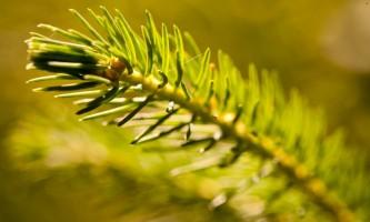 Alaska species trees Botanical Gardens 0093 Alaska Channel