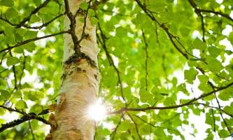 Alaska species trees Botanical Gardens 0152 Alaska Channel