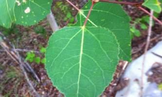 Alaska species treesd1582c9d f1af 4e6c b7cc 5819ae70a6be Alaska Channel