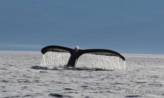 Alaska angoon best wildlife viewing spots chatham straits lillian woodbury Lilian Woodbury Airport Photo Contest