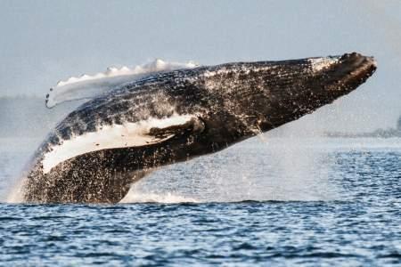 The Best Wildlife Viewing Spots in Juneau