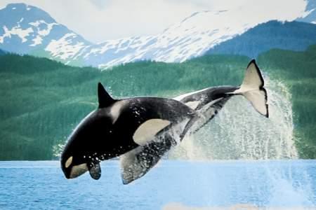 The Best Wildlife Viewing Spots on the Kenai Peninsula