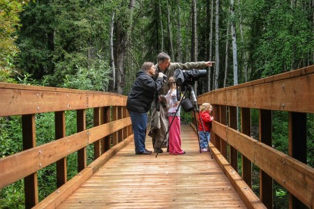 The Best Wildlife Viewing Spots in Fairbanks
