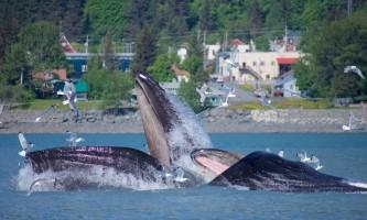Alaska Excursions2 1 2019