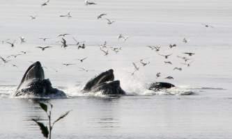 Alaska Wildlife Viewing Tenakee Tenakee Wildlife Viewing