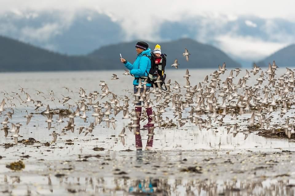 Shorebirds at Hartney Bay