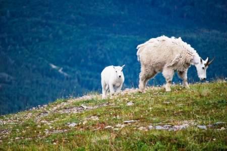 Mt goat spots alaska Cooper Landing Sabrina Kahles Sabrina Kahles