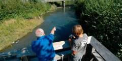 Williwaw Creek Fish Viewing Platform