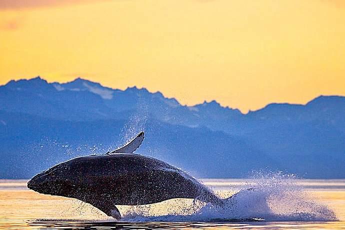 2012 whale2 pdixeb