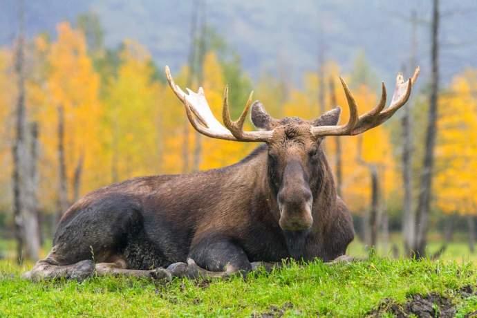 Alaska Wildlife Conservation Center AWCC 2636 pbro2b