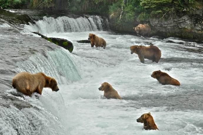 Alaska natural phenomena brooks falls douglas croft ph4ghq
