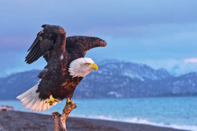 Best beaches Homer Spit Bald Eagle Jeremiah Fisher pq0jmn