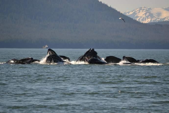 Best whale watching juneau whale watching elizabeth arnett pdk36g