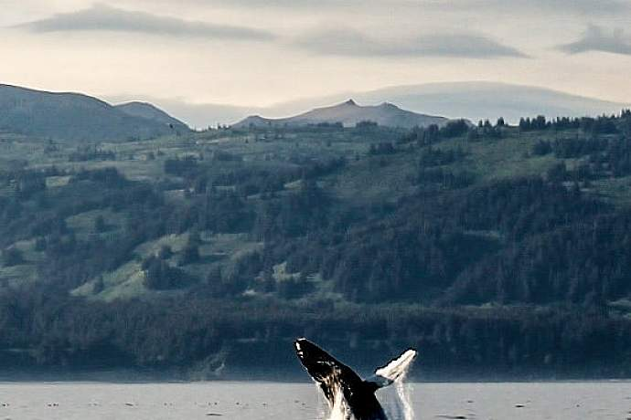 Best whale watching kachemak bay whales megan rolinger pdiw4c
