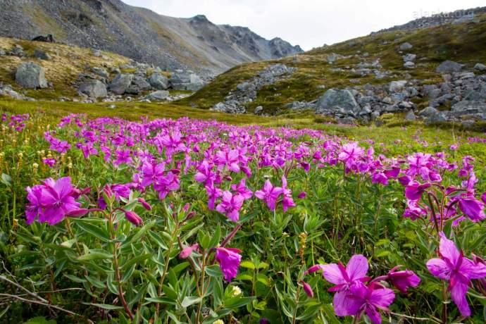 Seasonal rhythm of alaska high summer pdkkgi