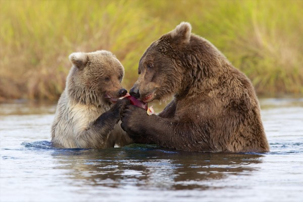 katmai-national-park-reserve
