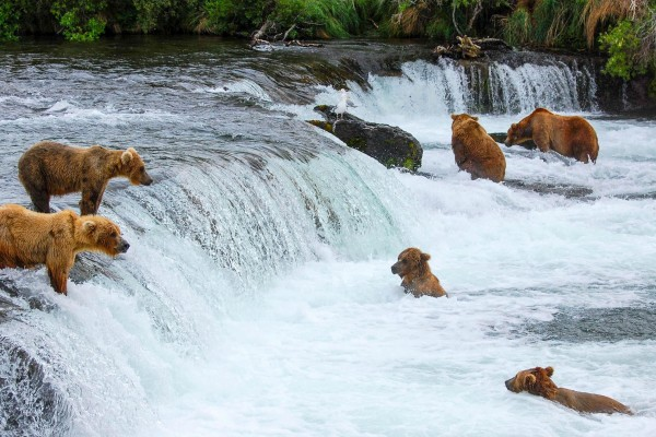 alaska-bear-viewing-tours