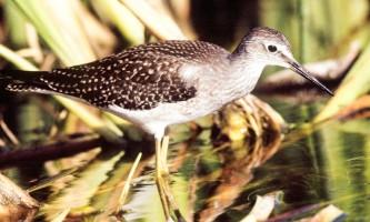 Bird_Species-03-mknjbv