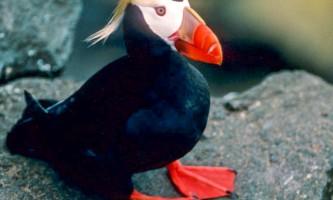 Bird_Species-05-mknjc3