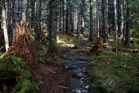 Caines Head Trail