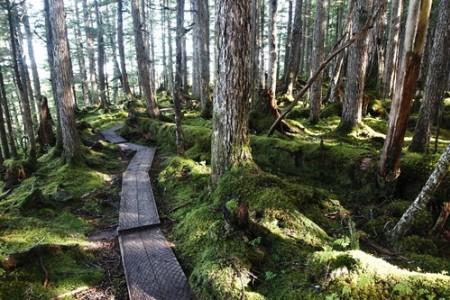 Haystack USFS Trail