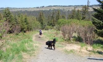Homer_Area_Trails-01-mocydn