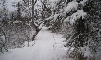 Near-Point-Trail-nhvo3h