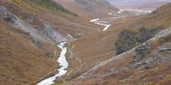 Savage River Loop Trail - Look for Dall Sheep & Caribou (Mile 15)