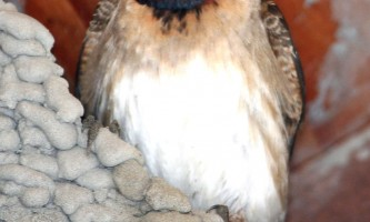 Bird_Species-13-mryhuu