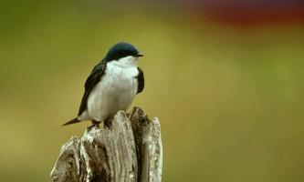 Bird_Species-17-mryhvn