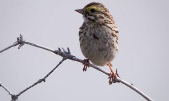 Bird_Species-08-n8ij0g