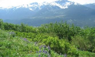 Mt_roberts-alpine-trailsarah-fullilove-mt_roberts-org2k2