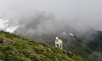 Mt_roberts-alpine-trailmt_roberts-catherin-mattson-org2l9