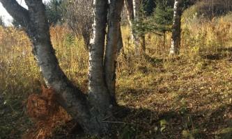 Ray-Clapp-Trail-IMG_1071-nz5xtp