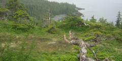 Perry Island W Campsite