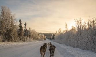 Black spruce dog sledding 11 17 13 0942 o164kk