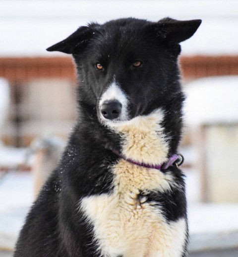Alaska Mushing School is located just 60 miles outside of Anchorage