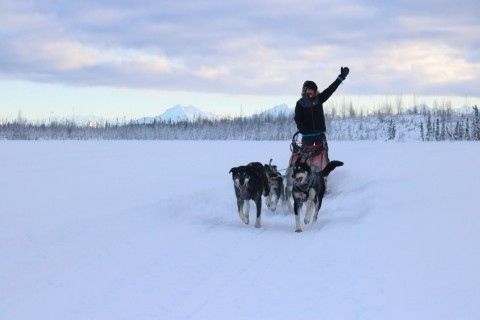 Experience the famous Iditarod route