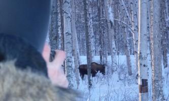Snowmobiling alaska wildlife viewing oxrmz7