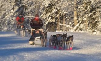 2019 fairbanks dog sled tours pmkpyh