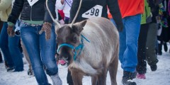 Running of the Reindeer
