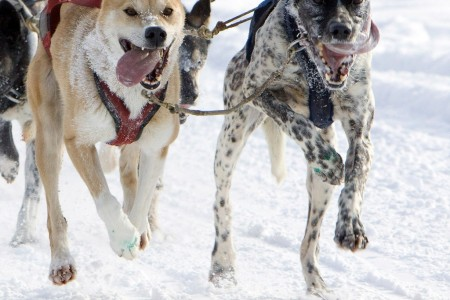 Iditarod Sled Dog Race (Ceremonial Start)