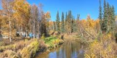 Bridge Over Little Chena River (mi 11.8)