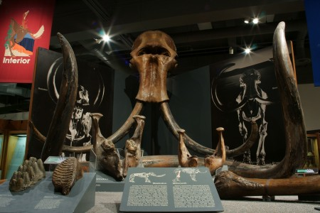 59. Mastodons and Woolly Mammoths