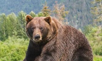 Alaska Wildlife Conservation Center 02 n4yrwi