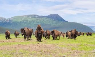 Alaska Wildlife Conservation Center 02 n4yrut